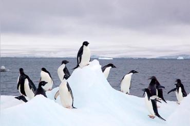 'One-of-a-kind' Emperor Penguin captured on camera in Antarctica