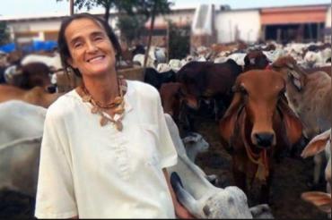 हजारों गायों की जान बचा चुकी जर्मन महिला लौटाना चाहती है अपना पद्म श्री सम्मान, वजह है ये..