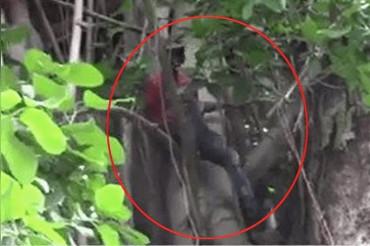 अजीब मांग को लेकर श्रीलंकाई समर्थक चढ़ा पेड़ पर, पुलिस ने उतारा